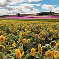 Rolling Hills Of Flowers In Summer by Jackie Follett