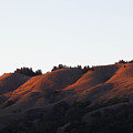 Rolling Hills  Of San Geronimo At Sunset by Andrea Freeman