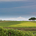 Rolling Tuscany 2 by Patrick English