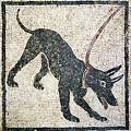 Roman Guard Dog Mosaic by Sheila Terry