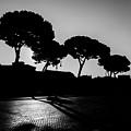 Roman Morning by Juan Pablo Esquivel
