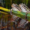 Romance Amongst The Frogs by Asbed Iskedjian