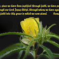 Romans 5 Verses 1 2 Yellow Wildflower by Linda Phelps