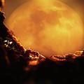 Romantic Ant by Andrew Chernenco