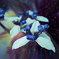 Romantic Island Lilies In Blues by Debra and Dave Vanderlaan
