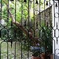 Romantic Yard by Valerie Ornstein