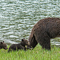 Romping By The Lake With Mama Bear by Yeates Photography