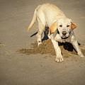 Romping Puppy by Jean Noren