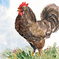 Rooster by Asha Sudhaker Shenoy
