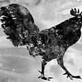 Rooster-black by Erzebet S
