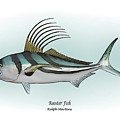 Roosterfish by Ralph Martens