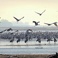 Roosting On The Platte by Susan Rissi Tregoning