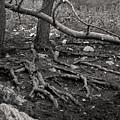 Roots by Arik Baltinester