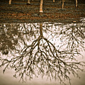 Roots by Derek Selander