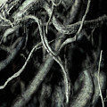 Roots Series #1 by   DonaRose