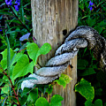 Rope And Vine by Lyle  Huisken