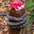 Rope Pillar And Camellia by Viktor Savchenko
