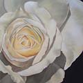 Rosa by Helene Fleury
