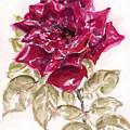 Rose 1 by Iris Kovalio