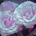 Rose 118 by Pamela Cooper