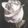 Rose 2 by Natalia Tejera