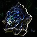 Rose 3 by Tim Allen