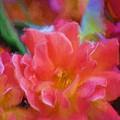 Rose 337 by Pamela Cooper