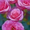 Rose 344 by Pamela Cooper