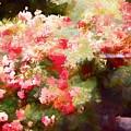 Rose 375 by Pamela Cooper