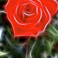 Rose-5879-fractal by Gary Gingrich Galleries