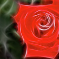 Rose-5890-fractal by Gary Gingrich Galleries