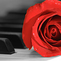 Rose And Piano by James Jones