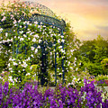Rose Arbor At Sunset by Jessica Jenney