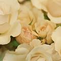Rose Bouquet by Deborah Benoit