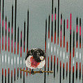 Rose Breasted Grosbeak And Song by Carol Hanna