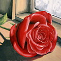 Rose By A Window by Sharon Marcella Marston