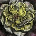 Rose Cream by Trish Taylor Ponappa