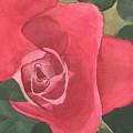 Rose  by Dawn Marie Black