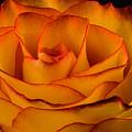 Rose Edge  by Maria Ollman
