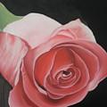 Rose by Eve Bodirwa