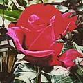 Rose Evening,oil by Olga Lyakh