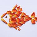 Rose Fish by Olga Sorokina