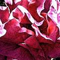 Rose Fresco by Elizabeth Tillar
