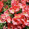 Rose Garden Pink Roses Botanical Landscape Baslee Troutman by Baslee Troutman