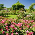 Rose Garden by Susan Cole Kelly