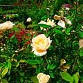Rose Gardens by Bennett Thompson