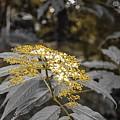 Rose Gold by Derrick Palmer
