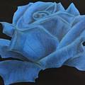 Rose by Graciela Acosta