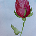 Rose by Heidi Smith