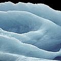 Rose Iceberg by Kedar Munshi
